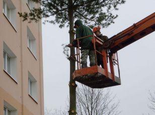 Kácení stromů a keřů