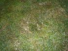 silne-napadena-trava.jpg